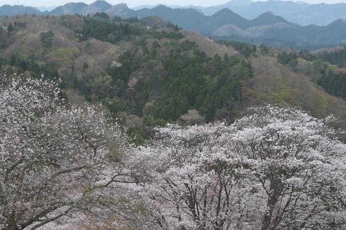 山奥の春景