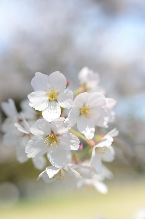 春気に融ける