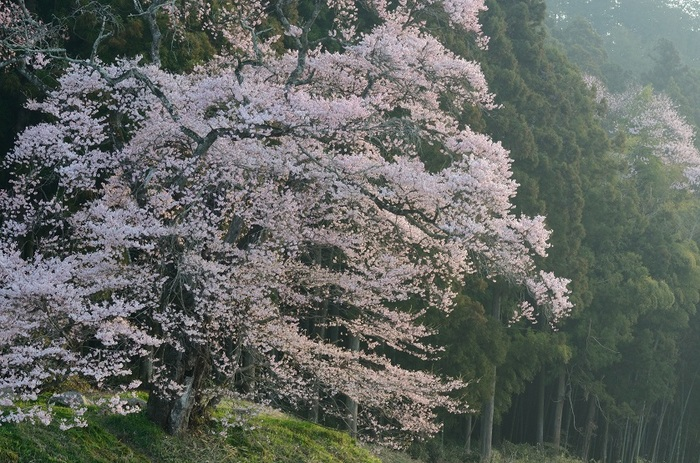 山里の春の誇り