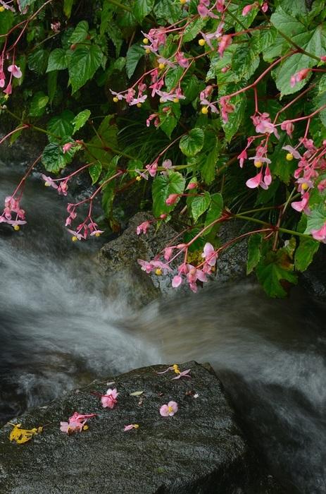 秋雨止む小渓