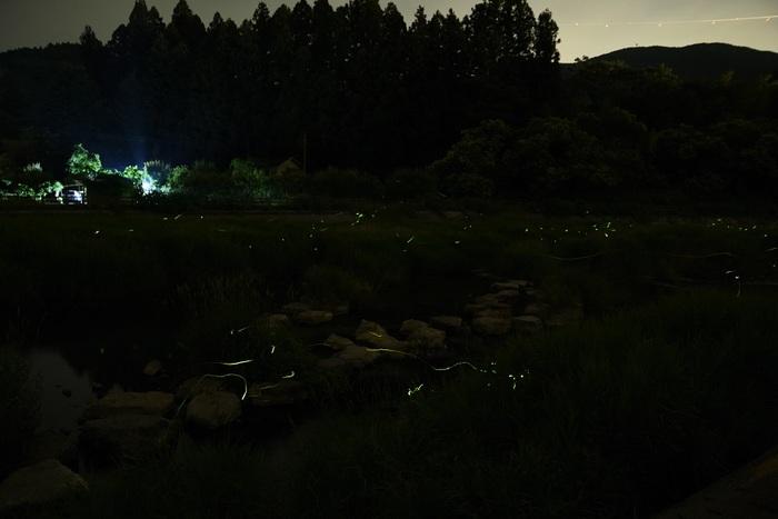 梅雨夜蛍光