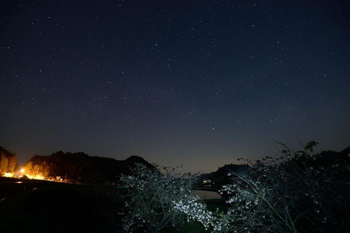 八重桜咲く夜