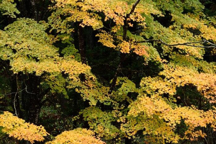 流れる秋彩