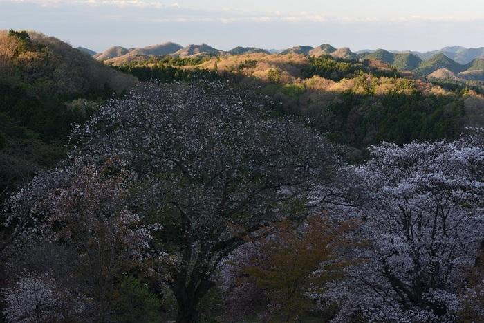 春陽・山奥の始動
