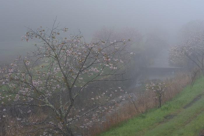 深霧の川音