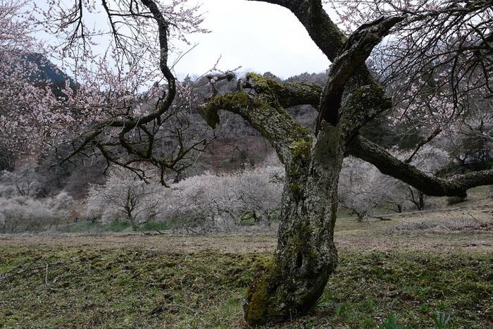 懐古の初春