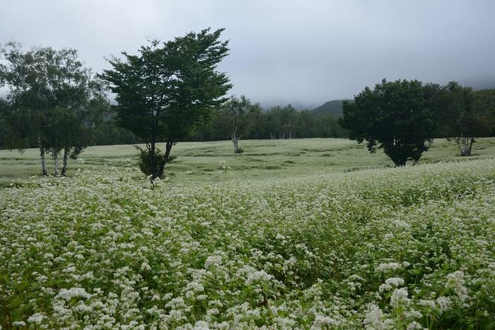 秋雨上がる白原