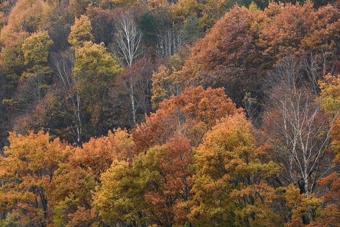 晩秋の橙彩
