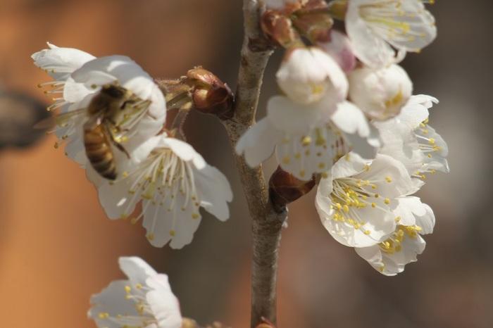 真春の香り