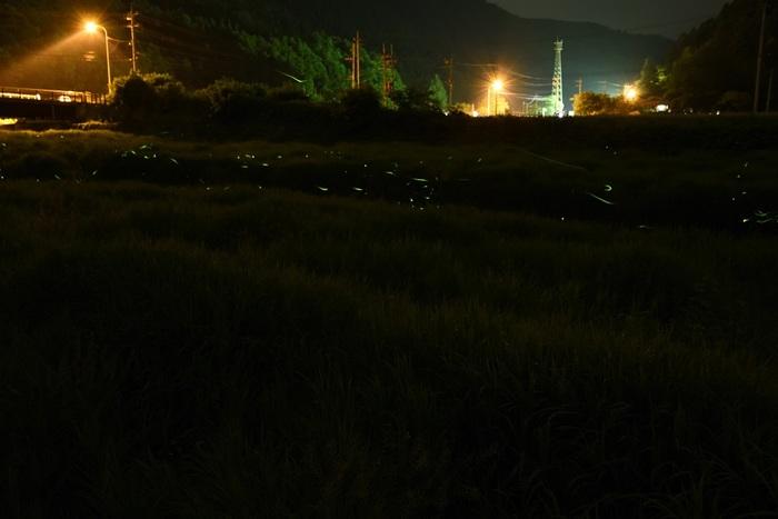 草原に灯る