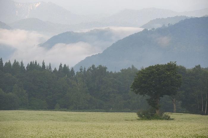 霧明ける朝