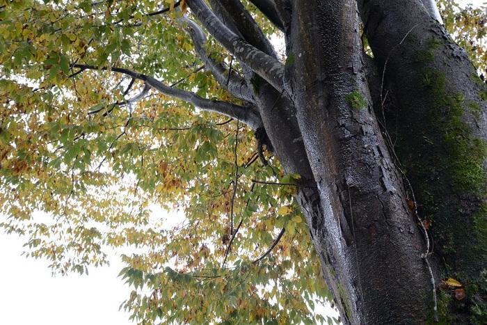 晩秋の濡れ樹