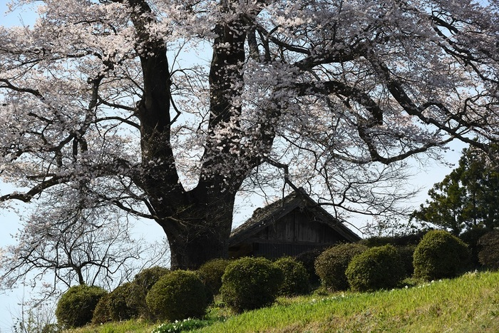 春の丘の上