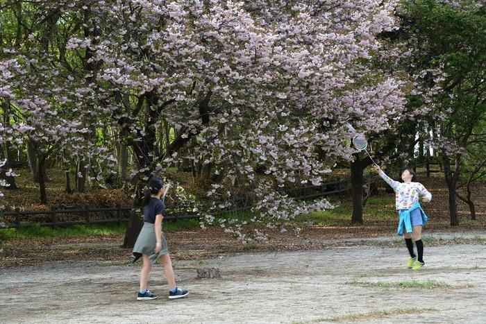 八重桜咲く日
