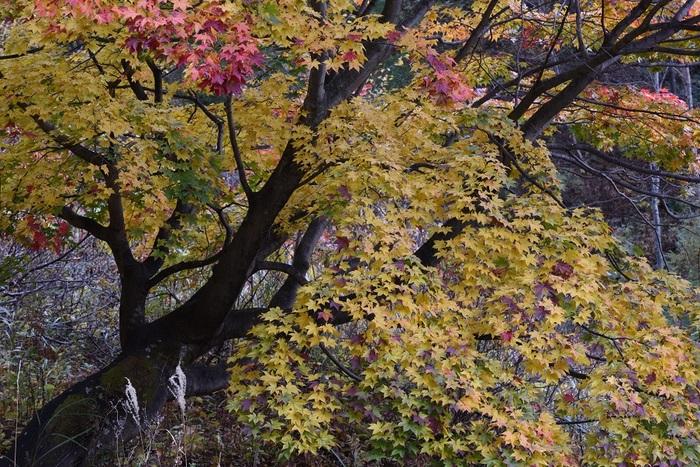 深山の秋色