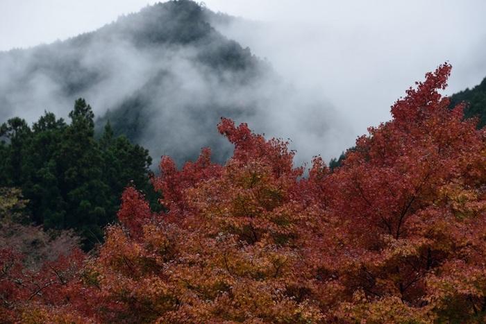 晩秋の雨上がり
