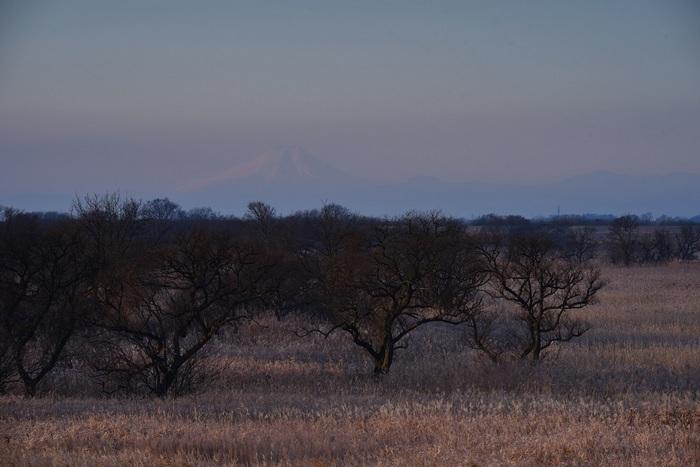 枯景の薄富士