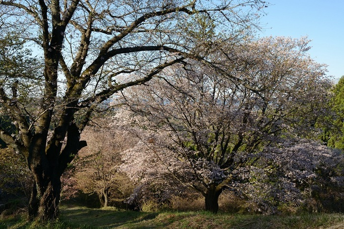 真春の尾根